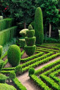 Ein botanischer Garten mit Buchsbäumen