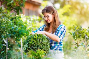 Wer seinen Garten pflegen möchte benötigt verschiedene Gartenwerkzeuge