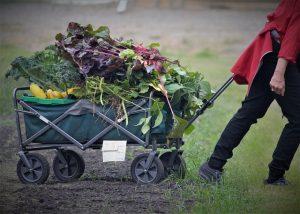 Ein Gartenwagen kann die Gemüsegartenernte erleichtern