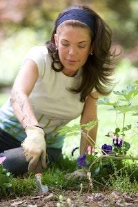Wühlmausgift kann ihren Garten retten