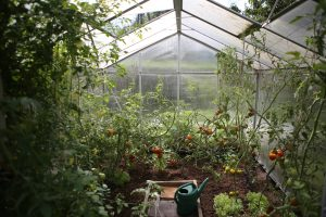 Im Gewächshaus herrscht das beste Klima für wachsende Pflanzen