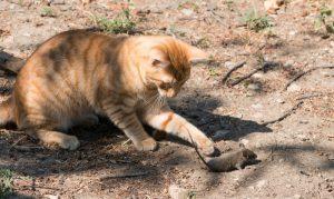 Eine Katze ist auch effektive gegen Mäuse im Garten