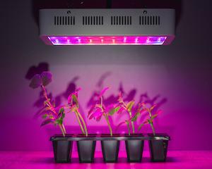 Eine Pflanzenlampe hilft jungen Pflanzen beim gesunden wachsen