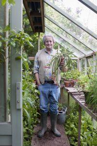 Ein Gewächshaus schützt Pflanzen vor schlechtem Wetter