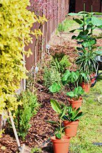 Schützen Sie Ihren Garten vor Wühlmäusen