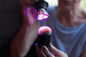 Eine einzelne LED-Pflanzlampe ist individuell einsetzbar