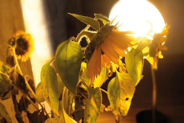 Pflanzenlampe Aktiv
