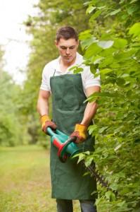 Akku Heckenschere Test im Garten