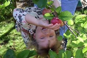 Kinder lieben es Obst von Bäumen zu pflücken