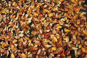 Im Herbst fällt sehr viel Gartenarbeit an