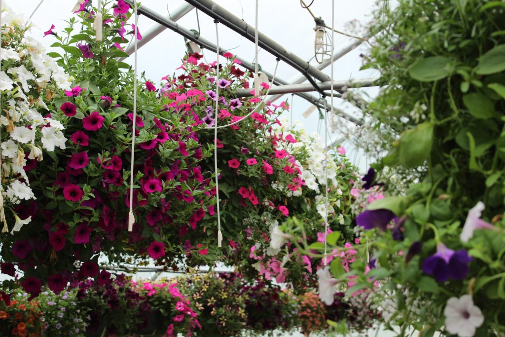 Blumenampel Hauptbild